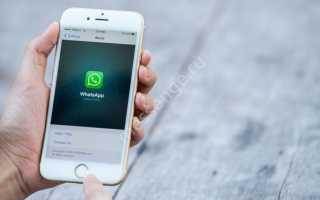Как обновить WhatsApp на телефоне c Android или iPhone